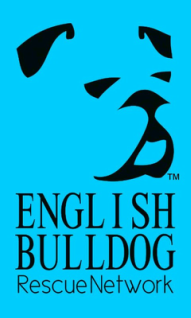 English Bulldog Rescue Network Houston